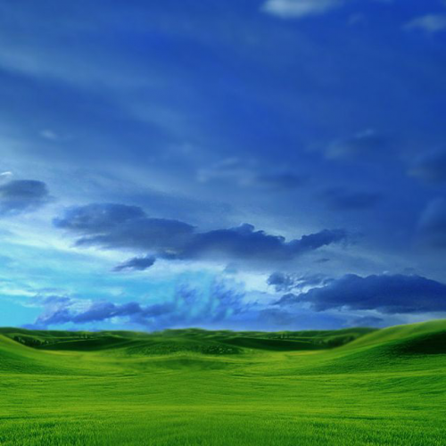 windows xp essay